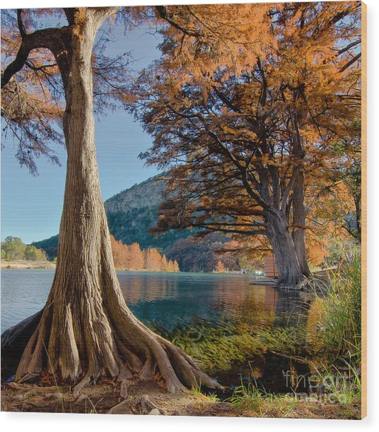 Among The Cypress Trees Wood Print