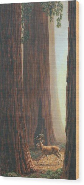 Sequoia Trees - Among The Giants Wood Print