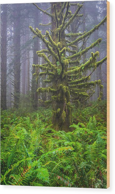 Among The Redwoods Wood Print by Mike  Walker