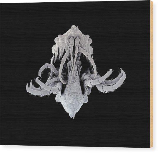 Amphipod Crustacean Wood Print by Petr Jan Juracka