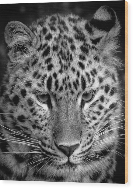 Amur Leopard In Black And White Wood Print
