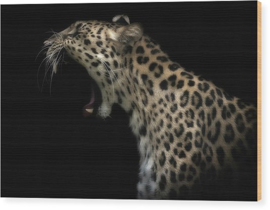 Amur Leopard (in Colour) Wood Print