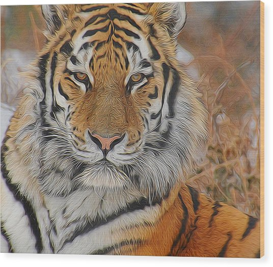 Amur Tiger Magnificence Wood Print
