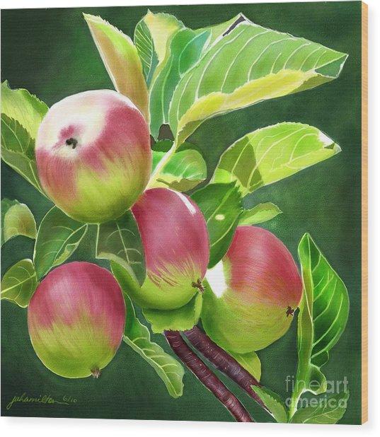 An Apple A Day Wood Print by Joan A Hamilton