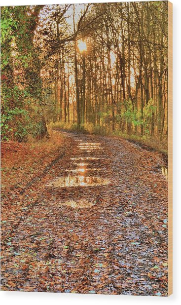 An Autumn Track Wood Print by Dave Woodbridge