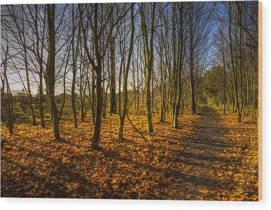 An Autumn Walk Wood Print