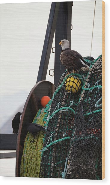 An Eagle Sits On The Fishing Nets On A Wood Print by Marion Owen / Design Pics