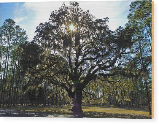 An Old Oak Tree Wood Print