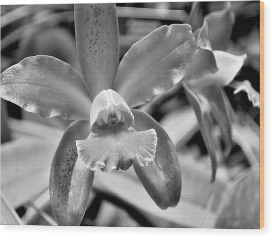 An Orchid. Wood Print