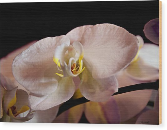 The Lisa Orchid Wood Print
