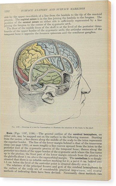 Anatomy Human Body Old Anatomical 126 Wood Print