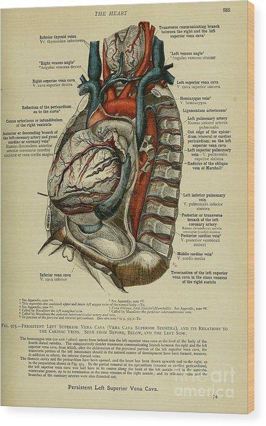 Anatomy Human Body Old Anatomical 76 Wood Print