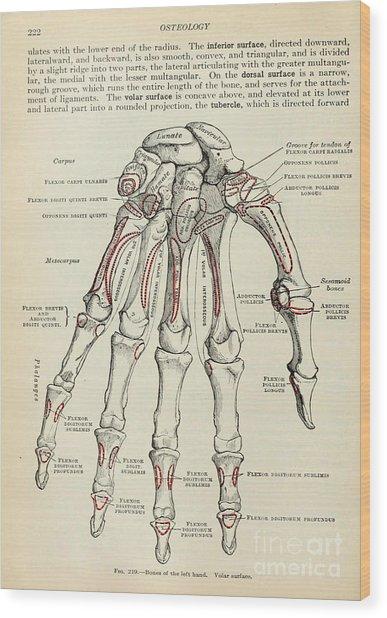 Anatomy Human Body Old Anatomical 77 Wood Print