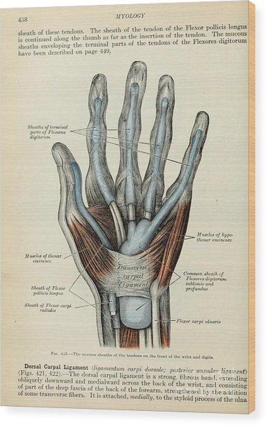 Anatomy Human Body Old Anatomical 83 Wood Print