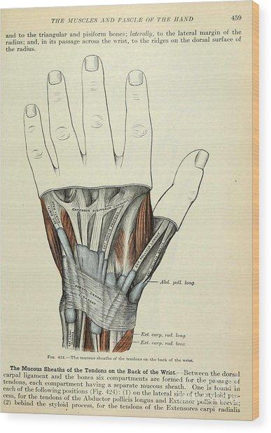 Anatomy Human Body Old Anatomical 84 Wood Print