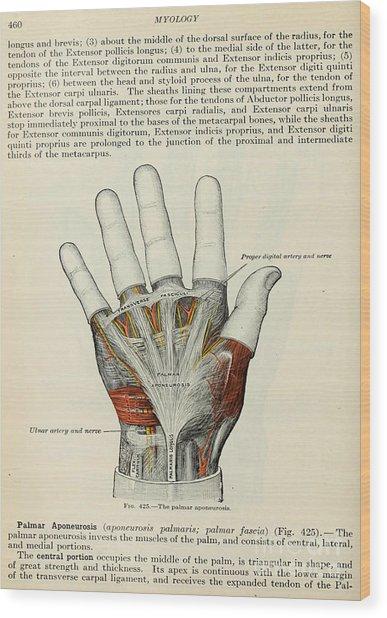 Anatomy Human Body Old Anatomical 85 Wood Print