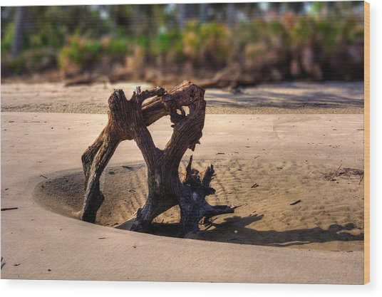 Anchor Driftwood On Jekyll Island Wood Print
