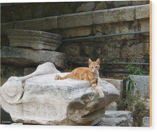 Ancient Agora Kitty Wood Print