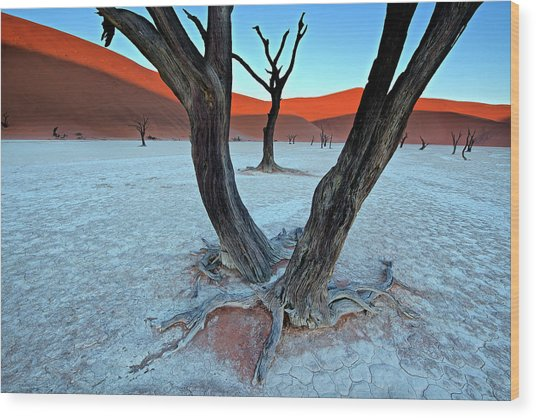 Ancient Trees In The Vlei Wood Print