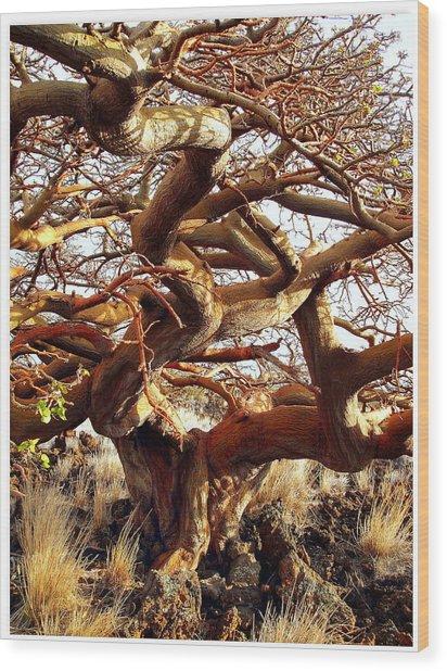 Ancient Wiliwili Tree Wood Print by Stephen Green