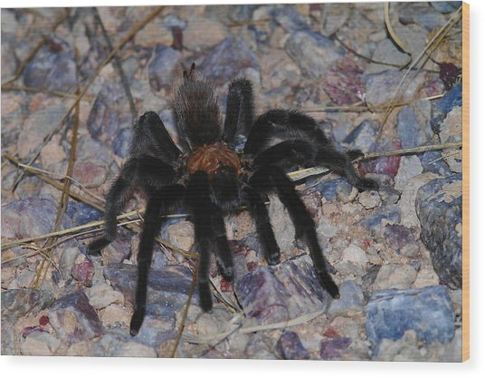And Along Came A Little Spider .  Wood Print