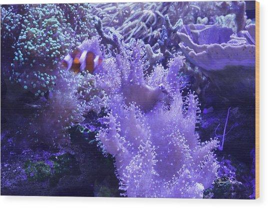 Anemone Starlight Wood Print