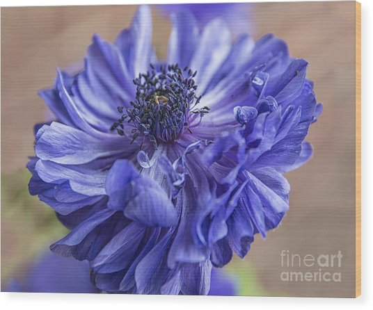 Anemone Blues I Wood Print