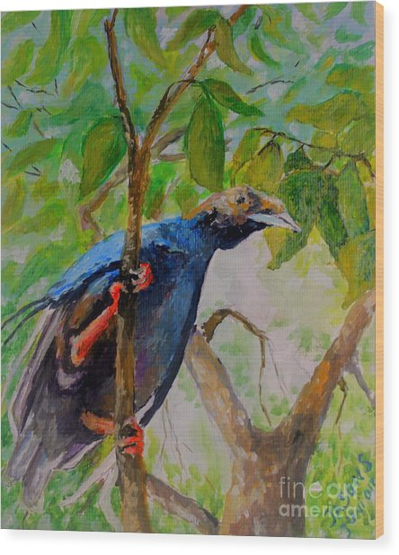 Angel Bird Of  North Moluccas Wood Print