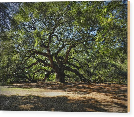 Wood Print featuring the photograph Angel Oak 001 by Lance Vaughn