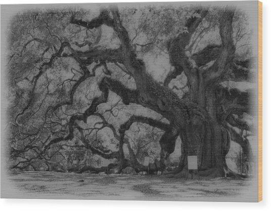 Angel Oak B And W Wood Print