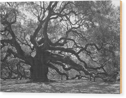 Angel Oak II - Black And White Wood Print