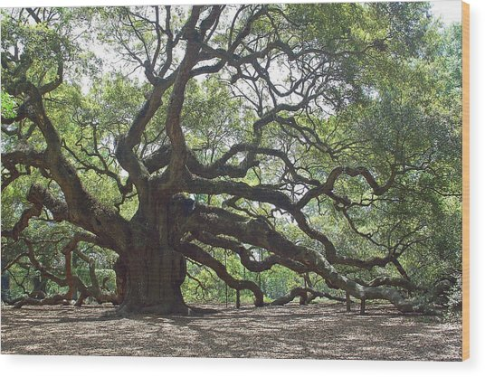 Angel Oak II Wood Print