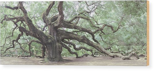 Angel Oak Wood Print