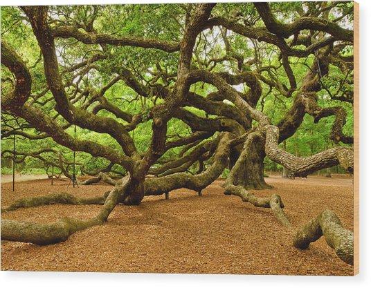 Angel Oak Tree Branches Wood Print