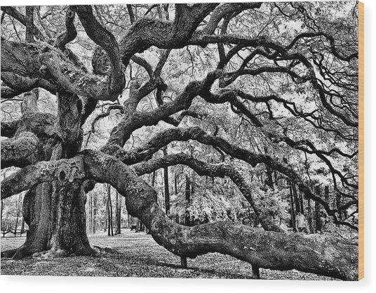 Angel Oak Tree Ir Hdr Wood Print