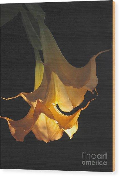Angel's Trumpet Wood Print