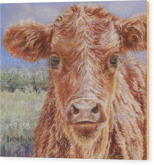 Angus Calf Norman IIi Wood Print