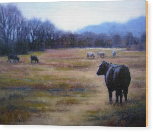 Angus Steer In Franklin Tn Wood Print
