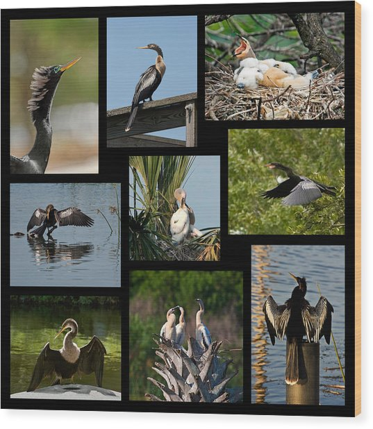 Anhinga Collage Wood Print