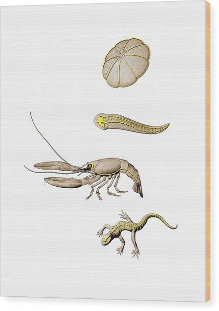 Animal Nervous Systems Wood Print