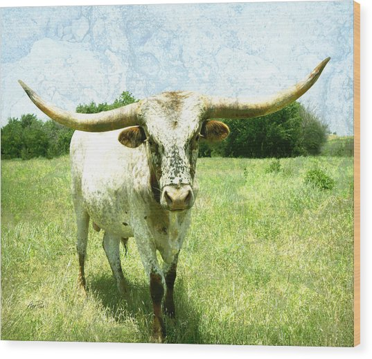animals - cows -Longhorn in Summer Pasture Wood Print
