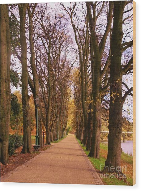 Another View Of The Avenue Of Limes Wood Print