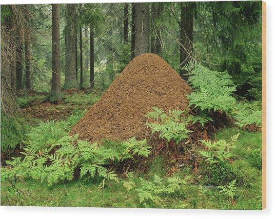 Ant Hill Wood Print