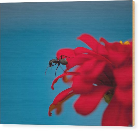 Ant On Flower Wood Print by Sarah Crites