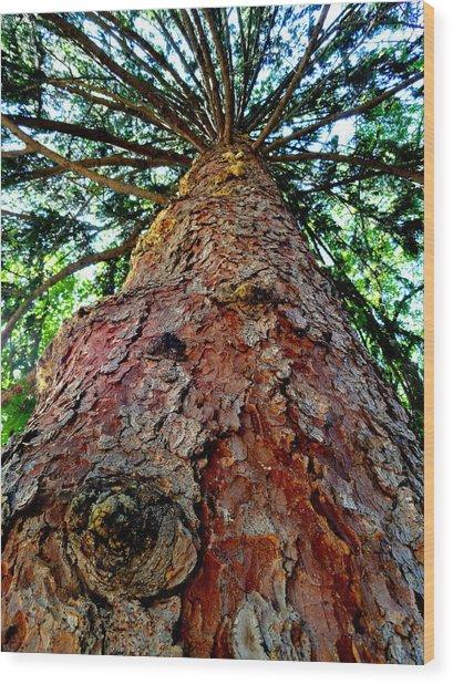 Ant View Wood Print