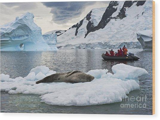 Antarctic Serenity... Wood Print