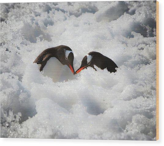 Antarctica A Pair Of Gentoo Penguins Wood Print