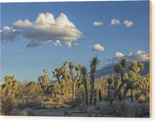 Antelope Valley Joshua Trees 2 Wood Print