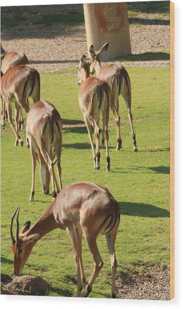 Antelopes Wood Print by Tinjoe Mbugus