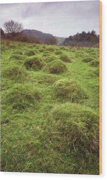 Anthills In Pasture Wood Print